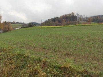 Aussichtslage Lichtenberg – sonniger Baugrund, 4040 Lichtenberg, Wohnen
