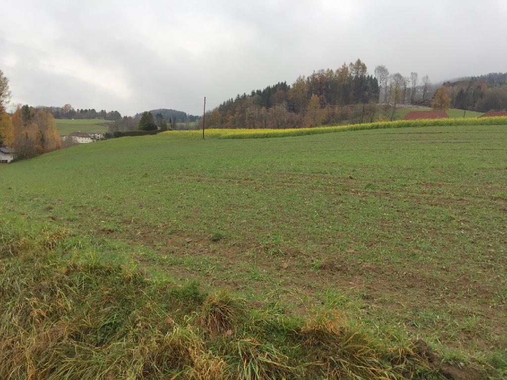 Aussichtslage Lichtenberg – sonniger Baugrund 4040 Lichtenberg, Wohnen